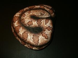 HPIM6351